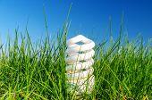 energy saving bulb in green grass against blue sky
