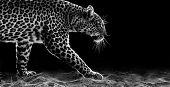 Leopard Walking