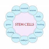 Stem Cells Circular Word Concept