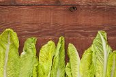fresh green leaves of romaine lettuce  against a grunge rustic barn wood table