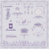 stock photo of lavender plant  - Lavender background and product  packaging design - JPG