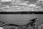 River And Sailboats, Black And White