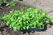 Seedlings on the vegetable tray.