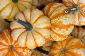 stock photo of gourds  - Closeup of ornamental yellow and orange pumpkins - JPG