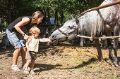 foto of feeding horse  - Mum with two-year child feed horse from hands