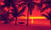 vacation, beach, summer and leisure concept - silhouettes of coconut trees with hammock on the beach
