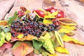 Autumn still-life with wild grape, apples and more