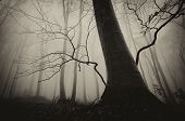 Dark spooky tree in a forest with fog on Halloween