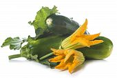 Zucchini With Leaves And Flowers