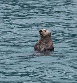 Seal Otter