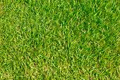 Close Up Of Green Grass Of Football Field.