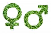 Gender Symbols Grass Man And Woman