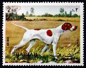 Postage Stamp Spain 1972 Pointer, Dog Breed