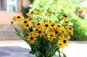 Beautiful Rudbeckia flowers in vase on wooden table, outdoors