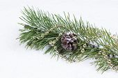 Holiday Fir Branch On Snow