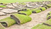 Rolls Of Green Grass, Laying In Progress.