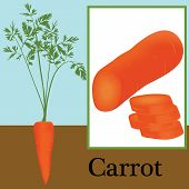 carrot as a plant, sliced