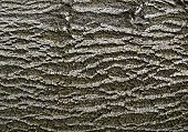 Abstract Bark Of Deciduous Tree