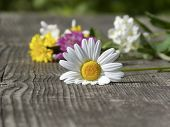 Spring flowers on a wooden table