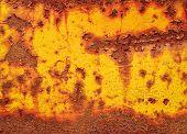 Yellow Rust Texture