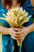 Bouquet With Spikelets Of Wheat Close Up In Mother's Hands