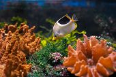 stock photo of coral reefs  - Colorful underwater world with one little fish - JPG