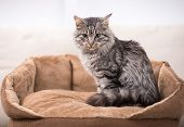 image of tabby cat  - Cute cat is sitting in his cat bed - JPG