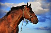 stock photo of black horse  - Horse and clouds and deep blue sky - JPG