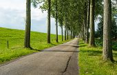 picture of dike  - Country road next to a dike and between rows of tall trees on a sunny day in summer - JPG