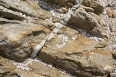 foto of calcite  - Calcite vein in rock at Rocky Point Tangalle Southern Province Sri Lanka Asia - JPG