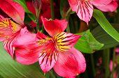 Macro Floral Arrangement