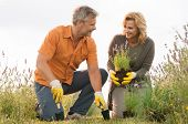 Happy Mature Man Digging In Field And Woman Holding Potted Plant