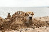 The dog buried in the sand on the beach