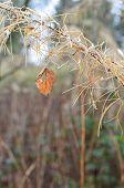 Last Autumn leaf.