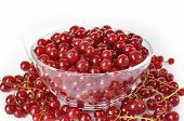 Red Currant In Bowl