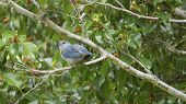 picture of tropical birds  - a tropical bird singing on a tree - JPG
