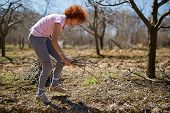 foto of spring-cleaning  - Caucasian woman spring cleaning the orchard gathering cut branches to throw them away - JPG