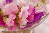 picture of sweetpea  - Bouquet of beautiful sweet peas flowers - JPG