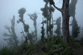 pic of gunung  - Tropical forest destroyed by volcanic eruption on the slopes of Mount Merapi  - JPG
