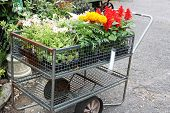 Cart with plants