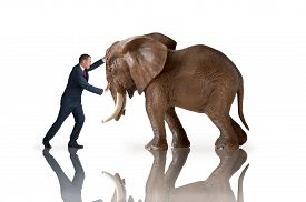 image of headstrong  - test of strength concept businessman pushing against an elephant - JPG
