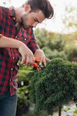 Side View Of Focused Gardener With Pruning Shears Cutting Plant In Garden poster