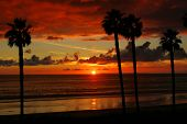 A Beautiful Sunset Through The Palm Trees In San Clemente