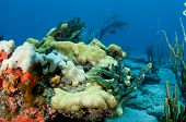 stock photo of datura  - Reef Composition picture taken in south east Florida - JPG