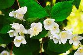 Find Artificial Flowers Jasmine