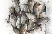 Black Tilapia Snapper Fish On Ice For Sale In Market poster