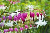 Beautiful Flowers In Springtime