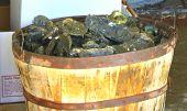 Scheffel Austern