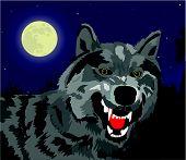 Lobo de la noche