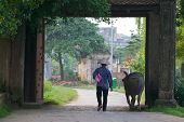 Vietnamese Farmer and Water Buffalo